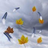 Wirbelwindbeschaffenheit mit Federn und Herbstblättern Lizenzfreie Stockfotos