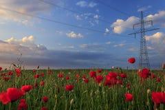 Wire across the poppy field Stock Photo