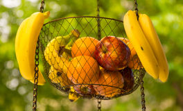 Wire basket of fruit hanging street vendor Stock Photography