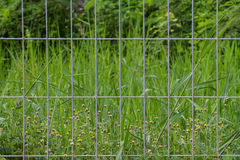 Wire cage and grass flower Stock Photo