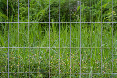 Wire cage and grass flower Royalty Free Stock Image