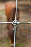 Wire cage for horse Royalty Free Stock Photography
