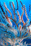 Wire coral Stock Images