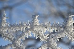 Wire fence covered with frost and hoarfrost Royalty Free Stock Photo