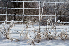 Wire fence covered in ice, in a snow country landscape Stock Images
