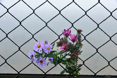 Wire fence flower and background Royalty Free Stock Photography