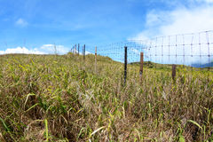 Wire fence in grassy field Stock Photos