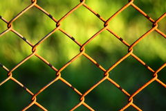 Wire fence with green in background Stock Photos