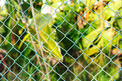 Wire fence with green grass on background Stock Photos
