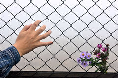 Wire fence holding hands and background Royalty Free Stock Photography