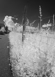 Wire fence in infrared light Stock Photos