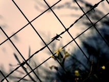 Wire fence Royalty Free Stock Images