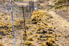 Wire fence in pasture vicunas Royalty Free Stock Photo