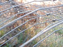 Wire or fence wet with a morning dew Stock Photo