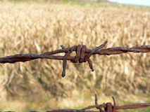 Wire Fencing, Barbed Wire, Grass Family, Grass Royalty Free Stock Photo