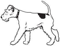 Wire fox terrier dog Stock Photos