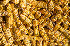 Wire mesh corn storage Stock Photo
