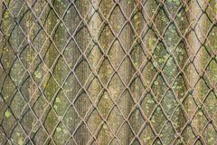 Wire mesh for fencing. old slate. Wire mesh for fencing. Wet old slate covered with moss and lichen. background surface texture Royalty Free Stock Photos