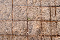 Wire Mesh ground sand royalty free stock images