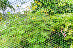 Wire mesh steel with natural background Royalty Free Stock Image