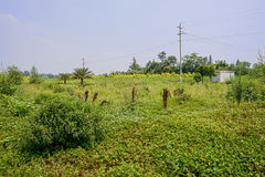 Wire poles in verdant wild on sunny summer day Royalty Free Stock Images