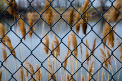 Wire and reeds Royalty Free Stock Photos