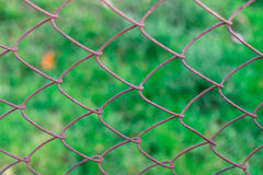 Wired fence on the background of green grass in the summer village Royalty Free Stock Photography