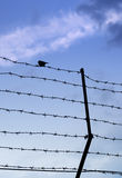 Wired fence with barbed wires Stock Photography