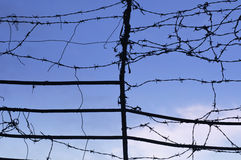 Wired fence with barbed wires Royalty Free Stock Photography