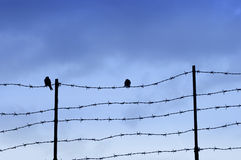 Wired fence with barbed wires Royalty Free Stock Image