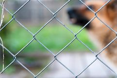 Wired fence. Wired fence, barking German Shepherd in the background stock image