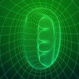 Wireframe滤网有机管 库存图片