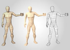 Wireframe human figure featuring something or somebody front vie. Human figure featuring or presenting something. Wireframe. Lowpoly. Wire mesh. Vector Stock Photos