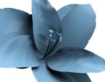 Wireframe raye la fleur d'isolement sur le blanc, Amaryllis Photo libre de droits