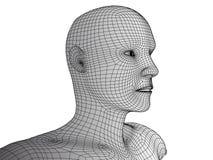 Wireframevektor för mänskligt huvud 3d på vit Arkivfoton
