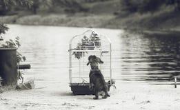 Wirehaired dachshund και πουλί στην όχθη ποταμού Στοκ εικόνα με δικαίωμα ελεύθερης χρήσης