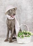 Wirehaired Slovakian pointer dog with flowers Royalty Free Stock Images