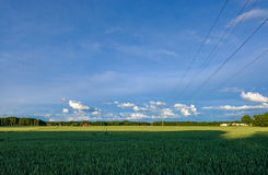 Wires across a field. Of wheat Royalty Free Stock Photo