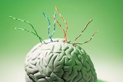Wires on Brain Specimen. With Green Background Stock Image