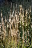 Wires of grass, moved by the wind. Wires of dry grass, moved by the wind Royalty Free Stock Photography