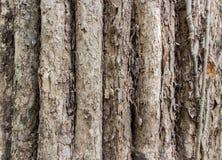 wirkliche alte Baumbeschaffenheit Stockfotos