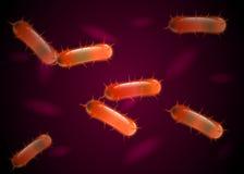 Wirkliche Bakterien unter Mikroskop in der Orange Vektor Stockfotos