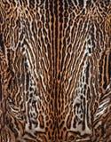 Wirkliche Haut des Leopardhintergrundes Lizenzfreies Stockfoto