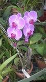 Wirkliche Naturorchideenanlage in unserem Garten lizenzfreies stockfoto