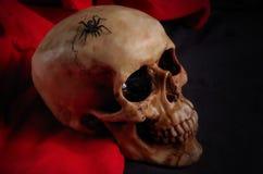 Wirkliche schwarze Spinne, die auf Schädel kriecht Stockbilder