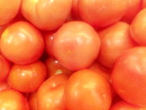 Wirkliche Tomaten Stockbild