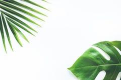 Wirkliche tropische Blätter stellten Musterhintergründe auf Weiß ein Flache Lage Stockfotografie