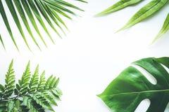 Wirkliche tropische Blätter stellten Musterhintergründe auf Weiß ein Flache Lage Stockbild