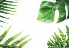 Wirkliche tropische Blätter stellten Musterhintergründe auf Weiß ein Flache Lage Lizenzfreies Stockbild