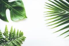 Wirkliche tropische Blätter stellten Musterhintergründe auf Weiß ein Flache Lage Lizenzfreie Stockbilder